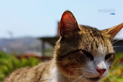 Un gato (Umapepe) Tags: naturaleza sol nature beautiful animals canon ojo photography photo foto kitty gato animales gatito fotografa immagini t4i umapepe jlbg