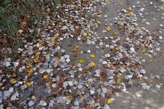 JRLD-20101118_5006 (XoseMon) Tags: spain zaragoza aragón aragn