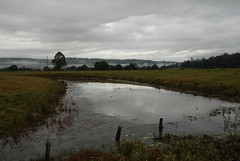 lagoon at Keerrong (dustaway) Tags: nature water fog clouds reflections landscape countryside scenery earlymorning overcast australia lagoon pasture valley nsw australianlandscape cloudscape ruralaustralia northernrivers rurallandscape morninglandscape wilsonsrivervalley keerrong