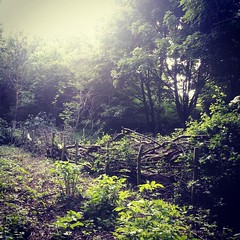 A fence made from fallen down branches (boobearphotos) Tags: sunlight green nature sunshine fence woodland branches recycling mothernature reused toton