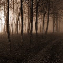 The Woods (Andrew Lockie) Tags: uk england rural woodlands track farm cotswold uplands chippingcampdencotswolds