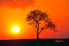 sunset_9268f (musicianwithcamera) Tags: sunset sky orange tree nature