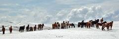 The Approach T-SP (H.B. Mejia) Tags: winter horses panorama rural spectacular wildlife gorgeous rustic stunning rodeo rollinghills winterweather dramaticskies wildlifephotography rodeohorses southernalberta wildlifephotos wintercolours dramaticweather ruralalberta stunningphotography spectacularphotography
