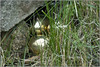 Nest Of Gold - 02 (Chris Noble Photography) Tags: stilllife holywell goldeneggs