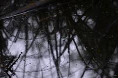 backwater (focallocus) Tags: uk light abstract nature water reflections ian nikon availablelight sooc d5100 focallocus