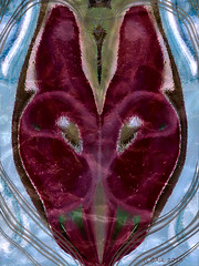 Female energy (Camilla's photos! Thank you for viewing ) Tags: abstract art norway female norge photo blood women heart egg seed care womb feminin hjerte fr energi omsorg