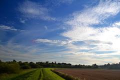 Sky (Chris_Jones.) Tags: trees summer sky sun green nature field clouds nikon d3100
