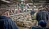 Sold to highest bidder (calvin.downes) Tags: shropshire sheep market shrewsbury livestockmarket