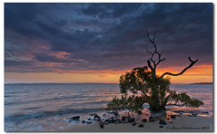I read recipes the same way I read science fiction. I get to the end and I think, Well, thats not going to happen. (danishpm) Tags: trees beach clouds sunrise seascapes places brisbane subject mangroves coochiemudlo southeastqueensland lonetrees