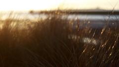 North Side Dawn (Amble180) Tags: wild panasonic northumberland about g3 minoltarokkor50mmf17