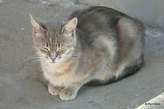 Бахчисарай, Ханский дворец, местный котик