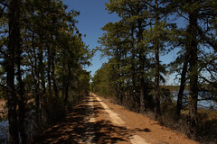 In The Pines (Michael Bixler) Tags: road new trees pine hiking dirt cranberry jersey pinelands barrens bog