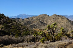 Mount San Jacinto (The Cabin On The Road) Tags: joshuatree
