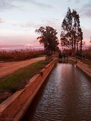 El Hondo, con las primeras luces del da (German Lopez Iborra) Tags: espaa spain alicante wetland elche crevillente humedal