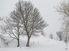 Tout est calme sous la neige ......... (AnneLise Pollet) Tags: winter snow nature montagne alpes landscape hiver arbres neige savoie paysage maurienne albiez saintjeandemaurienne albiezmontrond canoneos7d