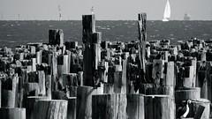 Princes Pier (Christine Amherd) Tags: city blackandwhite bw white black creativity blackwhite cosmopolitan ship australia melbourne sw australien ine schwarzweiss hafen weiss portmelbourne queenmary2 schwarz weltstadt habour passionate mypassion grossstadt schwarzundweiss princespier habourmelbourne hafenvonmelbourne christinescreativityphotography christinesphotography