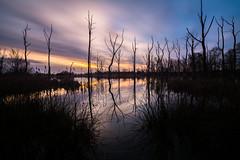 Arcot Hall Lake (Callaghan69) Tags: uk morning sky lake tree nature clouds sunrise reflections landscape nikon scenery northumberland slowshutter northeastengland northumbrian d7100 beautyofwater tokina1116 arcotlake wildaboutnorthumberland haida10stop