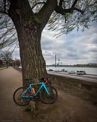 Zum Rhein für ein BAAT (Torsten Frank) Tags: baum baumstamm crossrad deutschland fahrrad fernmeldeturm fluss giant laubbaum nordrheinwestfalen radfahren radsport rhein rheinland sendeturm tcxadvancedpro1 turm wasser wolkendecke brücke düsseldorf bike bicycle cycling