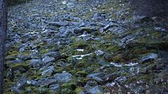 pierrier (bulbocode909) Tags: valais suisse bovernier pierriers nature montagnes catogne forêts troncs vert mousses hiver bandebovernier
