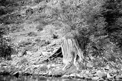 6.2016 Horseshoe Lake BW Cannon PS E03 (Jcicely) Tags: 2016 beach bw canonfilmpointandshoot easternwashington june kayaking loonlake loonlakewithmarvin trees water