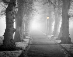 The Lamp (jactoll) Tags: evesham worcestershire fog foggy lamp trees mono sony a7ii jactoll