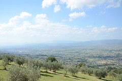 20160807-07 (Heinrock) Tags: assisi hill italy nikond7000 summer olives