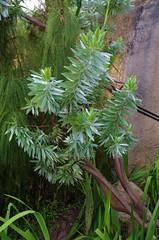 Shades of green (caro-jon-son) Tags: eden