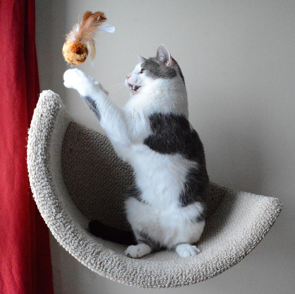 The Cat S Meow Ottawa