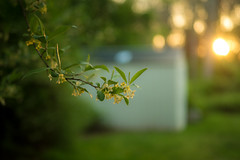 My Bokeh is Green (Noel Alvarez1) Tags: lumix g7 25mm f17 panasonic mirror less green nature landscape extreme bokeh colorful spring garden shed