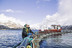 MFI_4755 (Nordlaks) Tags: nsc nordlaks norgessjømatråd norway vesterålen fish fisk laks seafood sjømat