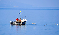 Les oiseaux et le pêcheur (Diegojack) Tags: montreux vaud suisse bateau pêcheurs oiseaux mouettes héron scènedevie léman