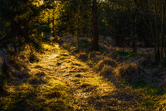 Yellow path (Rind Photo) Tags: sindal northdenmarkregion denmark yellow trail path silence isolation wood dreamscape light explore rindphoto clauschristoffersen bestofscandinavia nikondf