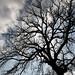 Naked Trees (26)