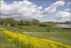 5 mei 2017 (Ria Rotscheidt) Tags: nederland rivierenland betuwe koolzaad rivieren groen lente wolken hollandse luchten