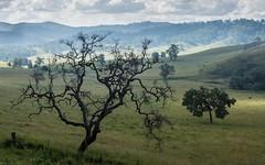 Eden Creek Valley (dustaway) Tags: landscape australianlandscape edencreekvalley nsw australia northernrivers richmondvalley trees pasture ruralaustralia angophorasubvelutina roughbarkedapplegum valley