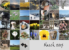 March 2017 mosaic (keepps) Tags: mosaic month bighugelabs
