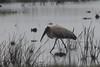 Wood Stork (Globalbirder) Tags: bird nope