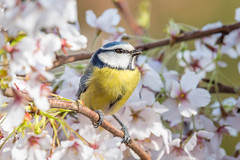 It is the Spring !!! ...151 (prometeusz5000) Tags: art animal flowers spring nature nikon