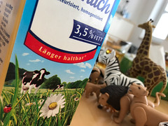 Animals, March 2017 (-masru-) Tags: blumen flower giraffe insekten kaiserslautern kuh lion löwe marienkäfer milch milk pflanzen projects projekte rind tiere utata weekendproject zebra utata:project=milk