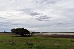 Pampa (luenreta) Tags: 7dwf pampa campo laguna arbol cloudy