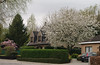 Enamoured Spring (Natali Antonovich) Tags: belgium belgie belgique spring enamouredspring architecture lifestyle tervuren blossom tradition cherrytree cherryblossom