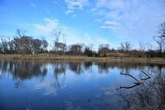 Sky everywhere (marensr) Tags: west ridge nature preserve blue sky clouds reflection pond water trees branches heavens