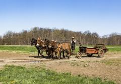 Farming (will139) Tags: farming farms amish working horses animals farmanimals rural ruralindiana