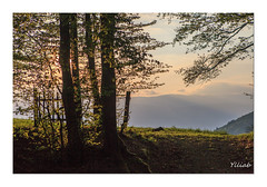 La porte ouverte sur ...  -The gate open on ... (Ylliab Photo) Tags: ylliabphoto ylliab paysage photographe photographie paturage laphotographiesimple lepaysagesimplement landscape canon soir sunset tree artiste autofocus arbre herbeys uriage light lumiere isere france