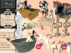 │T│L│C│ Gacha: 'animated puppies' @ The Cosmopolitan April 24 - May 5th (- TRUE & LAUTLOS CREATIONS -) Tags: tlc animated animal puppy puppies sl secondlife cosmopolitan eventhome collection