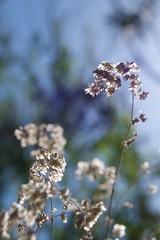Spring Breeze (The Good Brat) Tags: spring season wind breeze weather blue green garden backyard flora sky fresh
