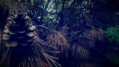 verstorbene Fichte (FGFotografie) Tags: deadtree forrest fichte wood fgfotografie mobileshot filter samsungs6