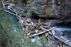 Johnston Creek Logs (pokoroto) Tags: johnston creek logs バンフ banff アルバータ州 alberta canada カナダ johnstoncanyon 8月 八月 葉月 hachigatsu hazuki leafmonth 2016 平成28年 summer august