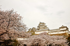 Castle and Cherry blossoms (moaan) Tags: himeji hyogo japan jp castle himejicastle architecture cherrytrees cherryblossoms blossoms blossoming inbloom fullblossom spring april utata 2017 canoneos5dsr ef1635mmf4lisusm
