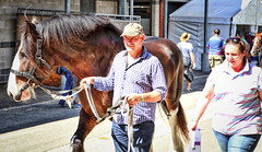 63+475: 2017 Sydney Royal Easter Show  (34/42) (geemuses) Tags: 2017sydneyroyaleastershow horse horses animals pets nature agriculturalshow riders riding stalls horsestalls sheds carthorse